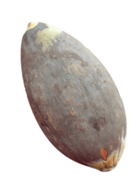Photo du fruit du baobab