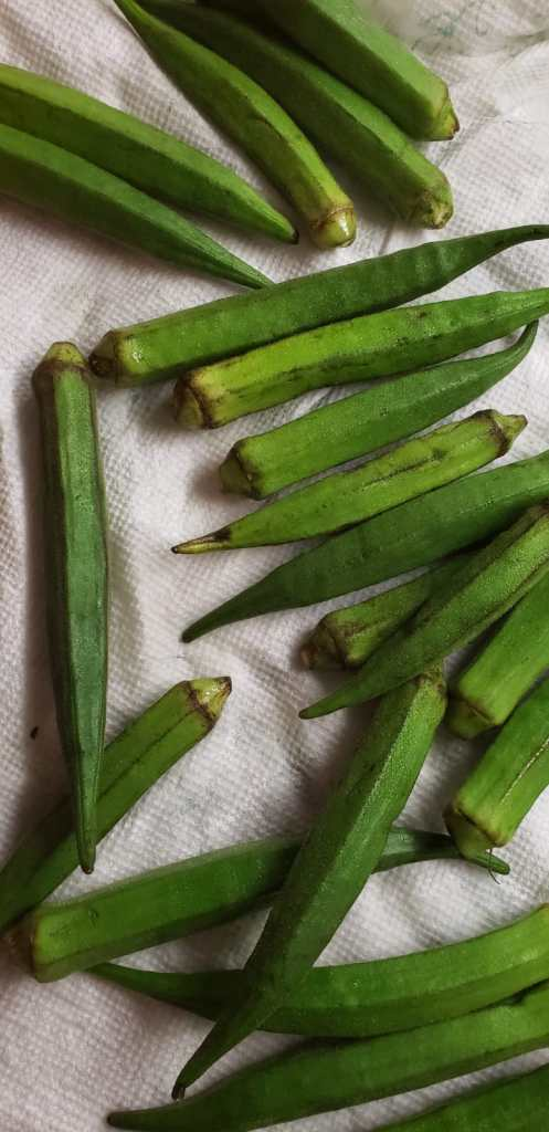 washed and dried okra