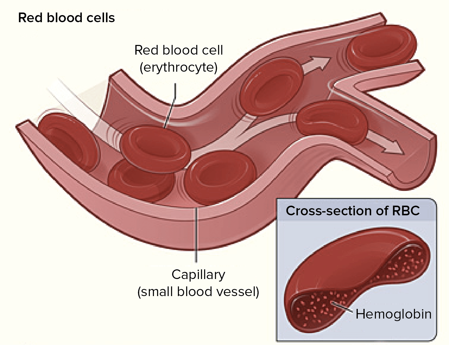 What Are The Functions Of Hemoglobin Or Haemoglobin