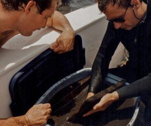 Keith_Holland-maple leaf dive team