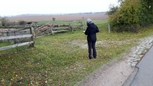 Wir beobachten Kraniche auf den Feldern an der Müritz (c) FRank Koebsch (3)