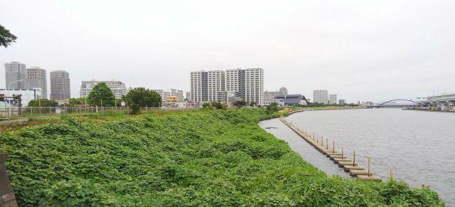 隅田川_白鬚橋北西のサンクチュアリ