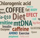 エクササイズコーヒーダイエット成分