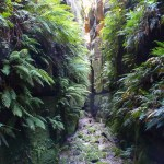 Newnes Canyoning Weekend
