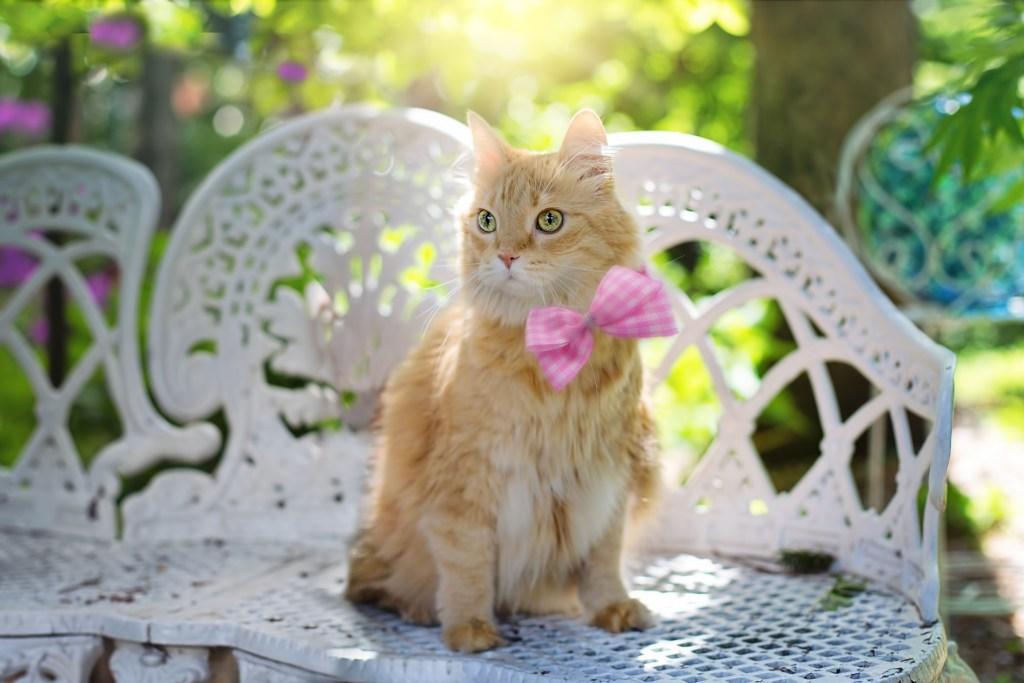 Orange cat in pink bow tie