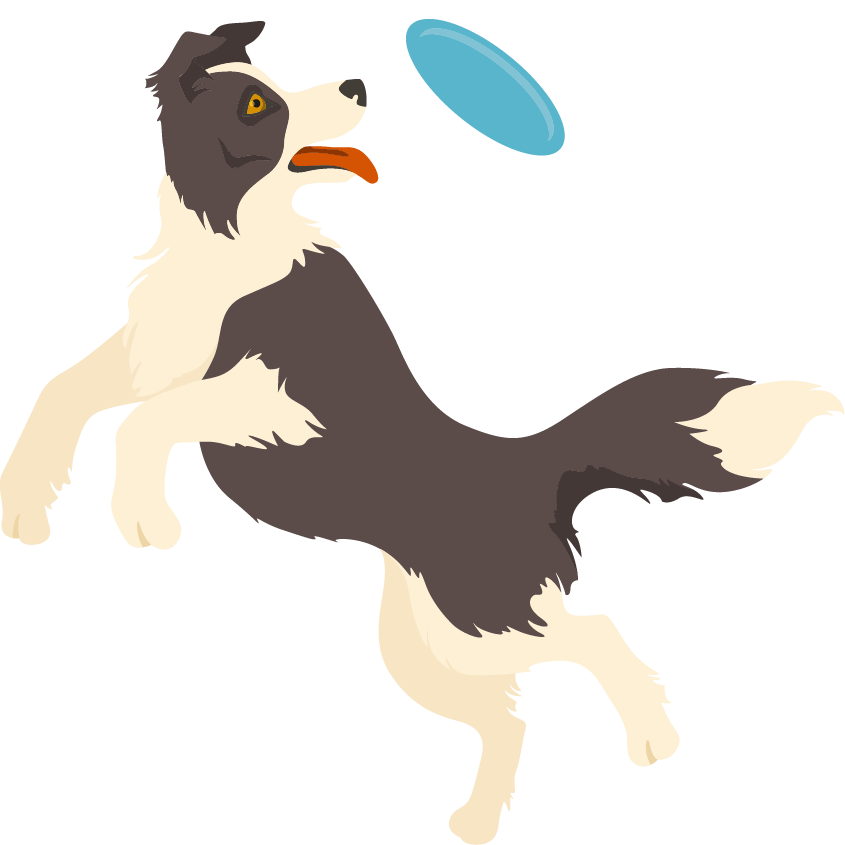 Collie catching a frisbee