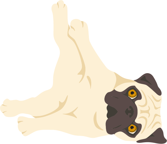 Pug playing dead