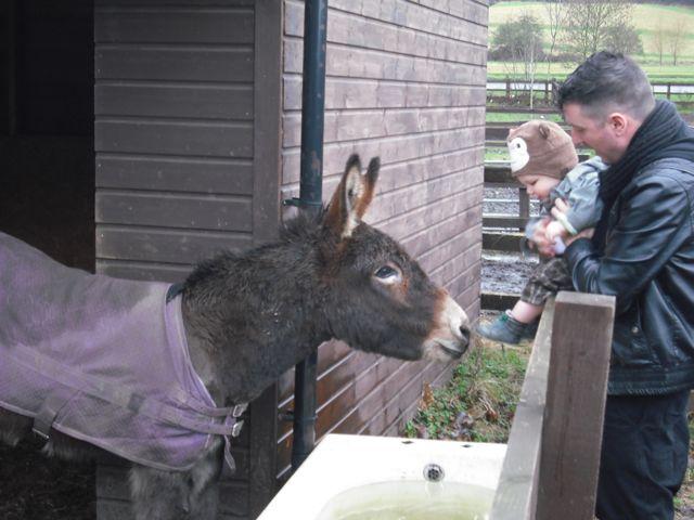 https://i1.wp.com/fatgayvegan.com/wp-content/uploads/2011/02/bobby-donkey.jpg?fit=640%2C480