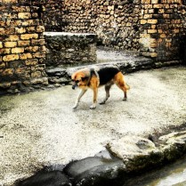 Dogs of Pompeii