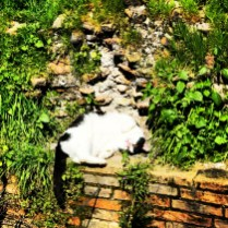 Cats of Largo Argentina - Rome