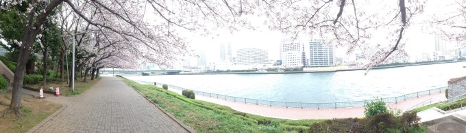 A panoramic view of the Sumida River. Tall apartment blocks can be seen on the far side of the river and there are cherry trees in bloom.