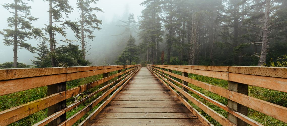 Wooden walkway into a misty forest of pine trees at Cape Disappointment, USA.