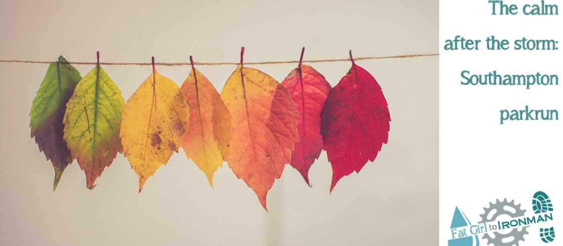 A row of Autumn leaves in colour order from green, through yellow to deep red.