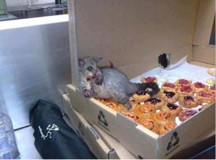 stuffed possum