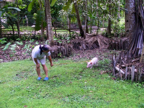 In June 2013, we got another piglet from the market.