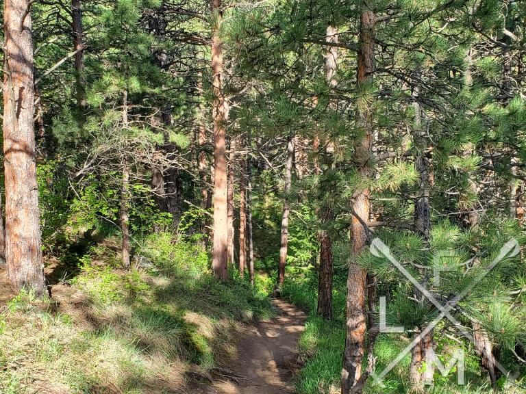 Blecher Trail.  The trail is going through a heavily wooded section with the sun peeking through.