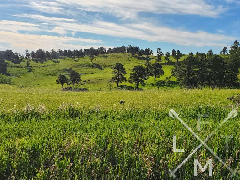 The view from Rawhide Trail at White Ranch Park.  A wide green grassed meadow with trees littering the hilly landscape