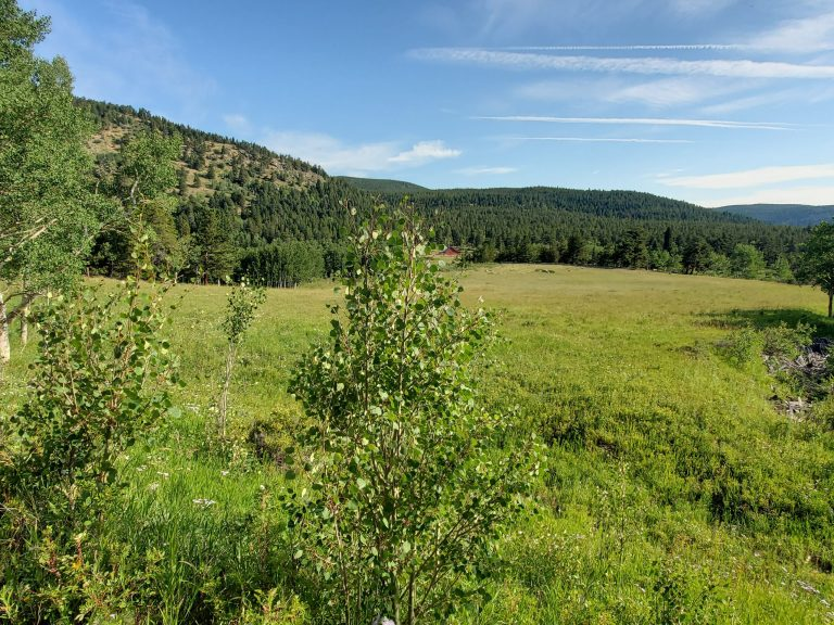 A view of the meadow that you see for the first time.  In the distance you can just see the red shape of a building that is part of the Delonde homestead.