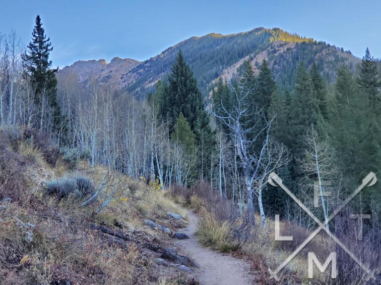 The trail leading through some aspen trees with pine trees and a mountainside in the distance.