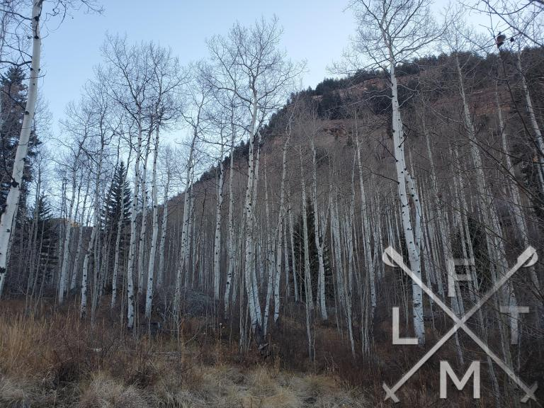 A mile or so of tall aspen trees make up the first part of the trail.
