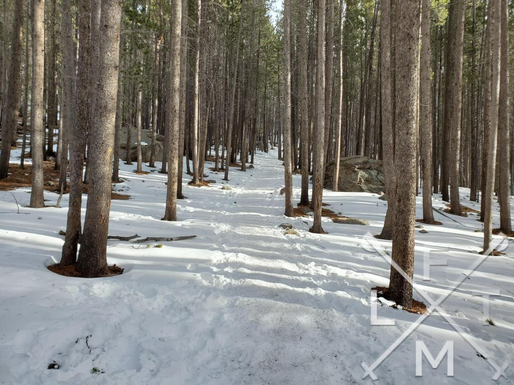 The trail covered in snow running between tall trees that stretch from the ground to the top of the picture on the Bierstadt Lake trail in Rocky Mountain National Park.