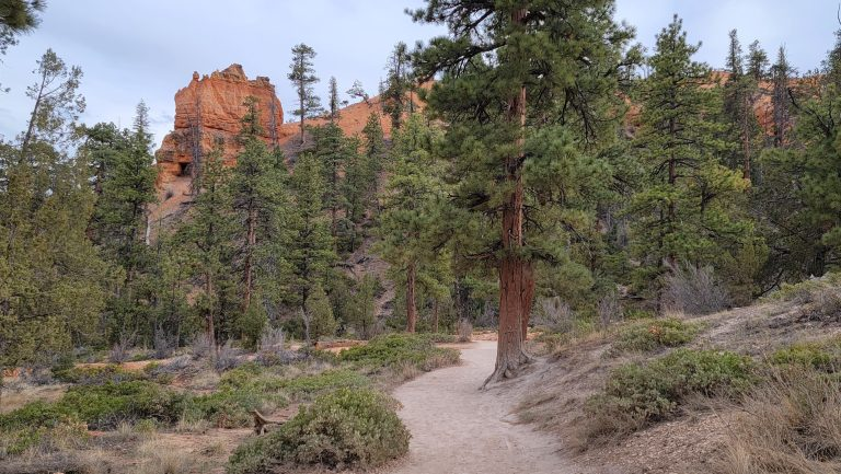 The bottom of the Queen's Garden Loop is full of green pine trees and bushes.  A stark difference from the dry stone structures from higher up in the canyon.