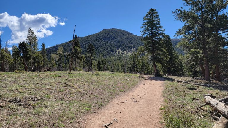 The view of Deer Mountain from the early portions of the Deer Mountain Trail.  There is a wide and flat sandy trail with a scattering of trees.