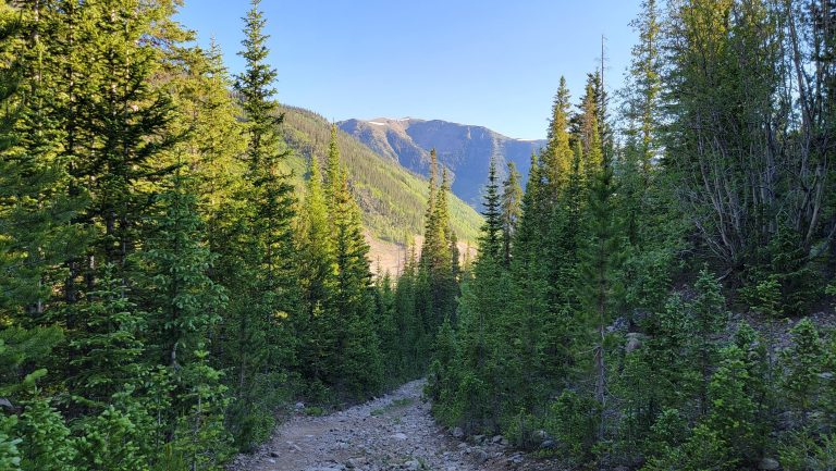 A look back down the steep dirt road that is surrounded by green pine trees. One of the best parts about Colorado hiking is the Mountains that are always in the distance.
