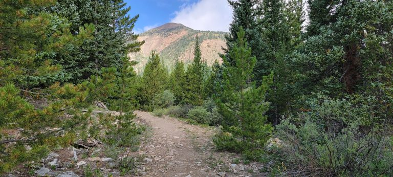 Trees line the trail with a distant view of a mountain on an early section of the French Pass Trail.