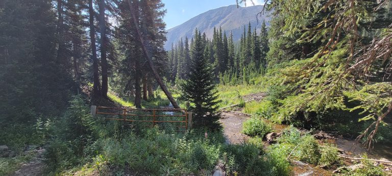 The shallow stream cuts through some thick sections of trees and growth on the French Pass Trail.