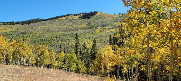 a hill lined with golden leaves with golden leaved aspens in the foreground. All part of the fall colors of Colorado at Kenosha pass.
