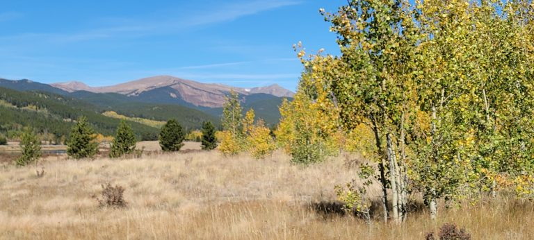 Aspen trees with yellow leaves in the foreground with a rocky mountain peak in the background are all part of the Fall colors of Colorado at Kenosha Peak