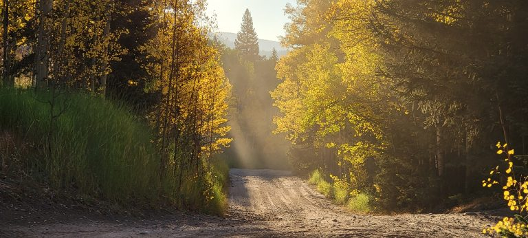 The sun shining through and lighting up gold aspen leaves on the trail to Gibson Lake