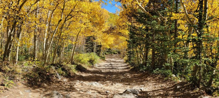 The road to the trailhead has aspens lining either side with golden leaves forming a canopy above on the way to Gibson Lake