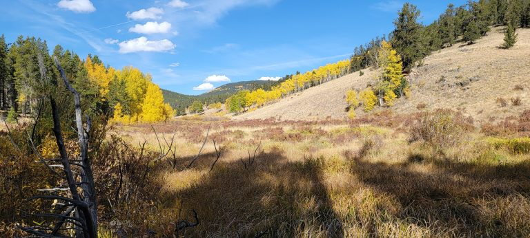 Yellow aspen trees in a meadow next to a hill on the upper portion of the Whiteside 697a Trail.