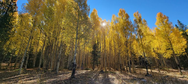 The sun is peaking through the top of a small grove of aspens leading to the entire grove looking to glow gold on the Abyss Trail to Helms Lake. Some of the great colors on a nice Colorado Fall Hike.