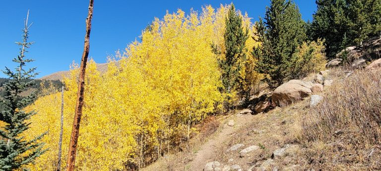 A small patch of bright yellow trees on the side of a hill next to the narrow trail on the Abyss Trail to Helms Lake, a colorful Colorado Fall Hike.