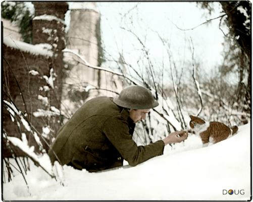 um-soldado-britanico-agita-as-maos-com-um-gatinho-em-um-banco-de-neve-em-neulette-pas-de-calais-17-de-dezembro-de-1917