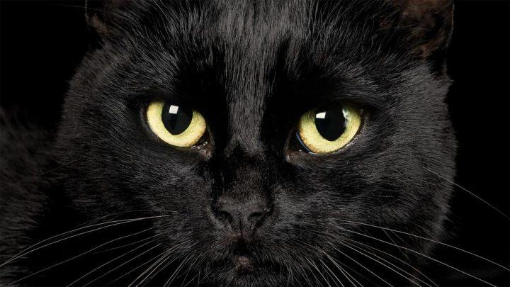 Il gatto nero, angoscia di non dormire