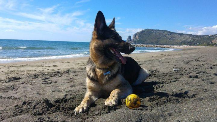 """A Fondi i cani sono ammessi in spiaggia solo se """"utili"""""""