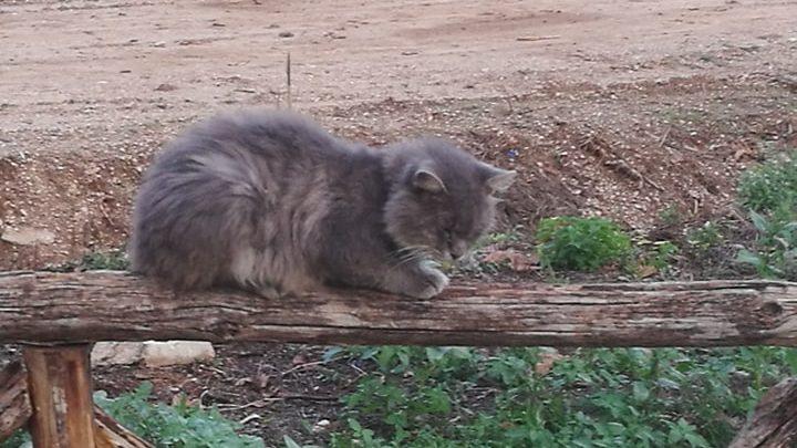 Fossanova e il mio incontro con gatto Tommaso