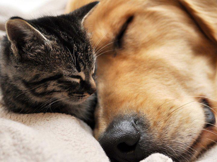 Amanti dei cani ascoltatemi: se non ci piacciono non siamo cattivi