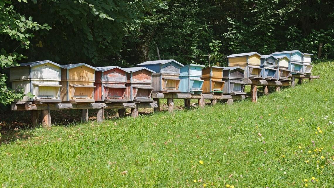 Formazione / Passione api, al via un corso per 20 giovani