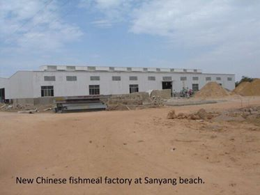 On The Chinese fish factories in The Gambia