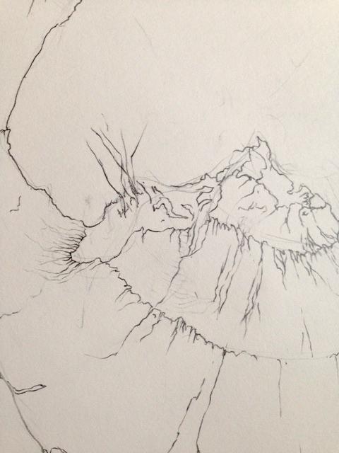 ginger_detail_02