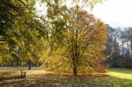 Couleur d'automne à Meise 013-3