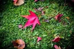 Couleur d'automne à Meise 029-8