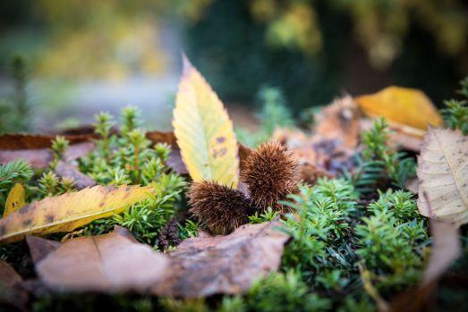 Couleur d'automne à Meise 047-1