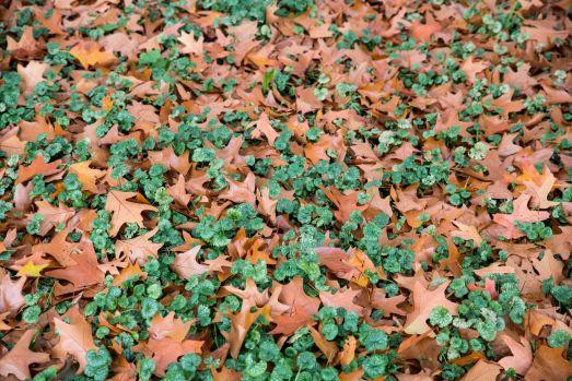 Couleur d'automne à Meise 073-11