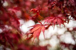 Couleur d'automne à Meise 080-13